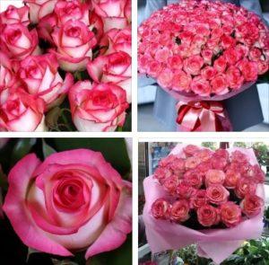 Розы джумилия оптом от производителя в Москве