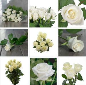 Купить розы белуга в Москве