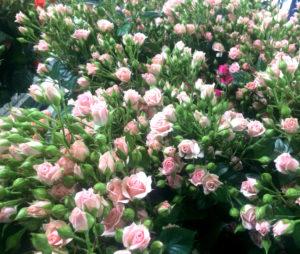 Купить розы спрей лидия