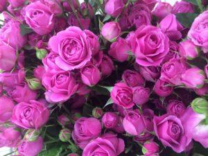 Купить розы Мисти Баблс оптом в Москве
